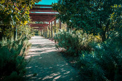 Quiet passage in St. Kilda Botanical Gardens on bright sunny day Stock Images