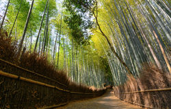 Quiet path in the Arashiyama bamboo grove in Kyoto, Japan Stock Image