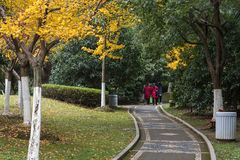 The quiet path in the autumn park Royalty Free Stock Photos
