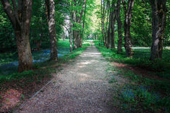 Quiet path in a dark forest in the spring Stock Photo