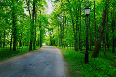Quiet path in a dark forest in the spring Stock Photography