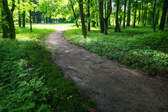Quiet path in a dark forest in the spring Stock Photos