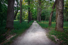 Quiet path in a dark forest in the spring Royalty Free Stock Photos