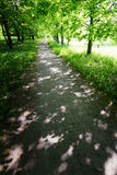 Quiet path in a dark forest in the spring Royalty Free Stock Photography