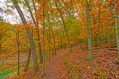 Quiet Path in the Fall Forest Royalty Free Stock Photography