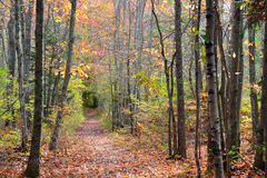 The Quiet Path. A path in the forest full of fallen leaves. Taken in Saco, Maine at Ferry Beach State Park Royalty Free Stock Photo