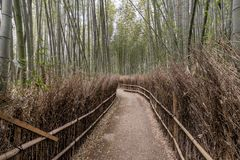 A quiet path inside the bamboo grove of Arashiyama, Kyoto, Japan. Asia Royalty Free Stock Photography