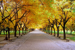 Quiet path in park with yellow leaves Stock Photos