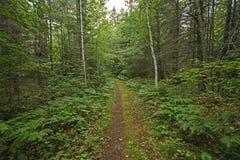 Quiet Path in a Sylvan Landscape. In Chutes Provincial Park in Ontario Stock Image