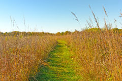 Quiet Path in to the Prairie Royalty Free Stock Images