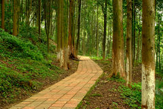 A quiet path in the woods. A quiet path extends in the woods Royalty Free Stock Image