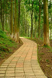A quiet path in the woods. A quiet path extends in the woods Stock Photos