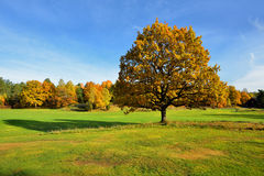 Quiet place in the nature in a european northern country, Royalty Free Stock Image