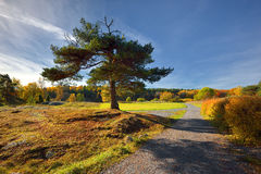 Quiet place in the nature in a european northern country, Royalty Free Stock Photo
