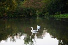Quiet pond in the autumn park. Stock Images