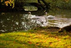 Quiet pond in the autumn park. Stock Photos