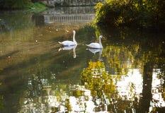 Quiet pond in the autumn park. Stock Image
