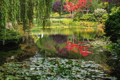 Quiet pond, overgrown with lilies Stock Images