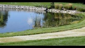 Quiet Pond in the park Stock Photos