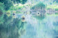 The quiet pond, scenic landscape of tropical pond on winter evening, gently reflecting of plants on freshwater. Phukhieo Wildlife. Sanctuary, Thailand stock images