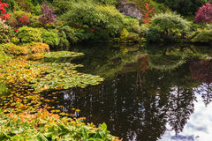 Quiet pond on Vancouver Island Stock Photography