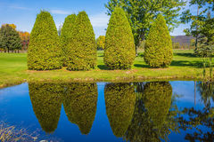 Quiet pond with water mirror Royalty Free Stock Photo