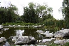 Quiet pond with wildlife Royalty Free Stock Photos