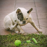 Quiet puppy dog on a garden with its green toy Royalty Free Stock Photos