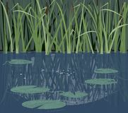 Quiet river nook. Quiet river corner with reeds and water lilies stock illustration