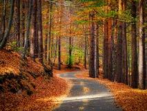 Quiet road during autumn season.  Stock Photos