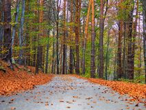 Quiet road during autumn season.  Stock Photography