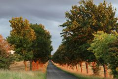 Quiet road roles of red tree trunk and green leaf royalty free stock photo