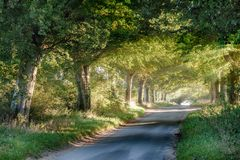 Tree covered rural lane at sunrise. Quiet rural road at sunrise through a arch of mature trees. Golden sunlight pours under the summer canopies of green leaves Royalty Free Stock Photos