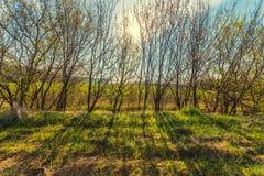 Quiet rural spring landscape Stock Image