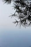 Quiet seascape, with a branch of pine tree Stock Image