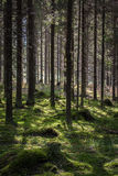 Quiet shady forest Stock Photos
