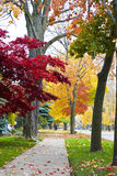 Quiet sidewalk and colorful leaves. Fall colors and a quiet sidewalk Stock Image