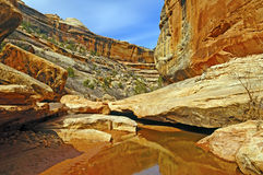 Quiet Stream in a Desert Canyon Royalty Free Stock Images