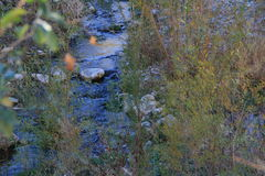 Quiet Stream. A quiet stream flows past the tall grasses Royalty Free Stock Photo