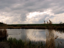 Quiet summer lake. Cloudy weather over the lake in a reed environment Stock Photo