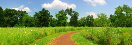 Quiet trail panorama. Quiet trail to the woods with wild flowers in panorama Royalty Free Stock Images