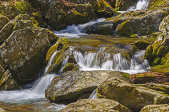 Quiet Water in a Mountain Stream Stock Image
