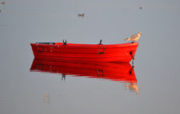 Quiet water. Seagull on a red small boat on very quiet water on the fjord early morning Royalty Free Stock Photos
