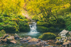 Quiet waterfall in the jungle. Quiet waterfall in a jungle Stock Image
