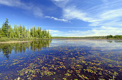 Quiet Wetland Pond on a Summer Day Royalty Free Stock Images