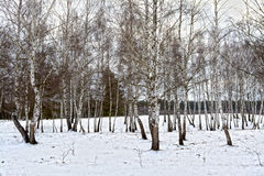 A quiet winter forest Royalty Free Stock Photos