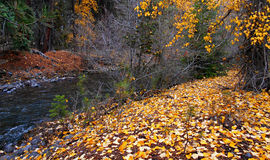Quiet Woods Walk. Fall scene along Whychus Creek south of Sisters, OR royalty free stock photo