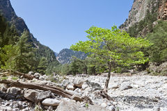 Quietness of the Samaria Gorge Stock Image