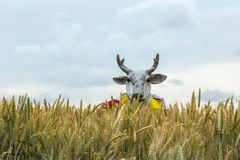 Stag Disguise in the Cereal Field - Tour de France 2015. Quievy,France - July 07, 2015: A persons in a stag disguise is hiding in the cereal field during the Royalty Free Stock Photo