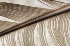 quill пера стоковая фотография rf